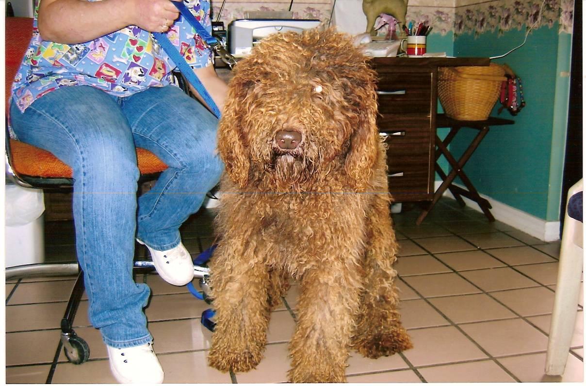 Adopt A Dog Canada Ontario